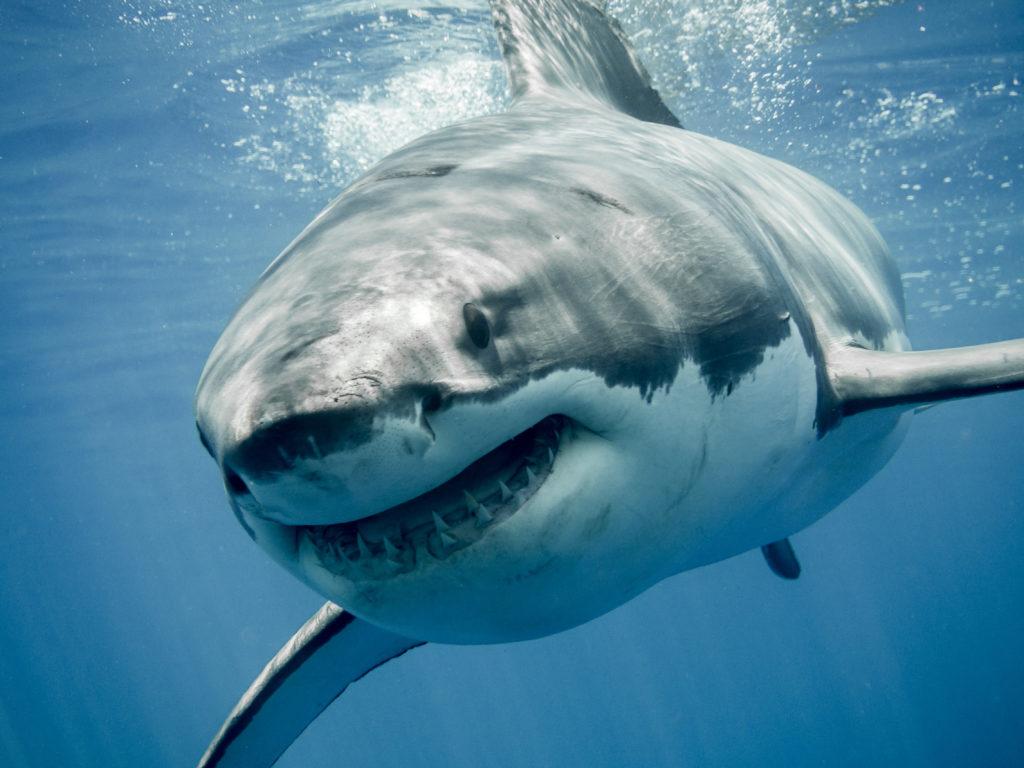 サメ映画ヒストリー[2020年版]―この傑作を見逃すな!