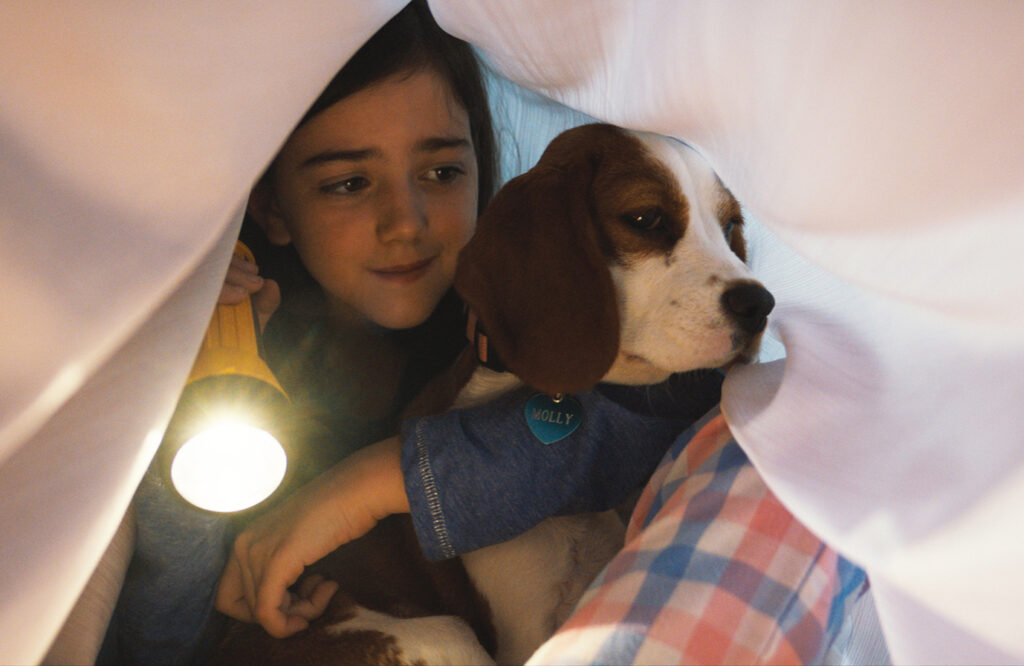 主題歌&挿入曲も絶品!犬との絆を描いた感動作の続編『僕のワンダフル・ジャーニー』